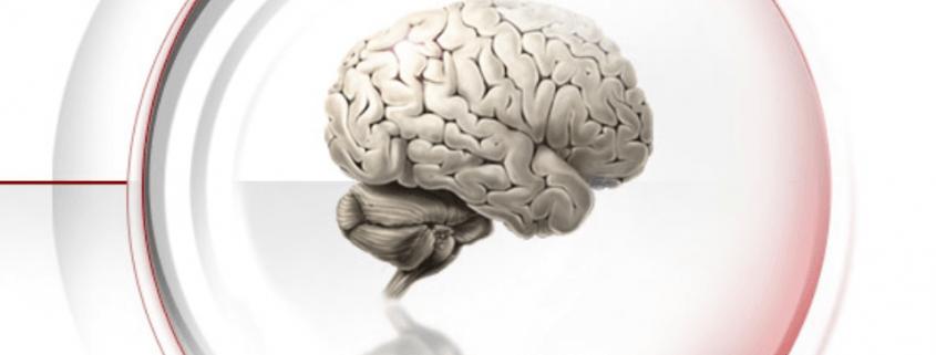 Funktionelle Neuroanatomie mit Nelson Annunciato