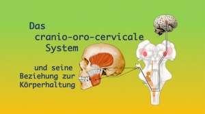 Das cranio-oro-cervicale System